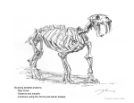 Anatomy_Bones_1