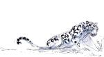 jaguarcopy