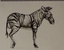 Sketch by Matthew Zikry